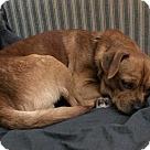 Adopt A Pet :: Yorn