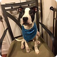 Adopt A Pet :: Kira - Long Beach, NY
