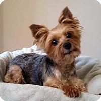 Adopt A Pet :: It's Zoe Kay - Sinking Spring, PA
