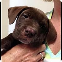 Adopt A Pet :: Triton - Morganville, NJ