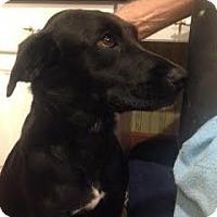 Adopt A Pet :: Carly - Sparta, NJ