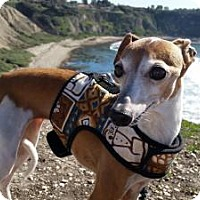Adopt A Pet :: Dusty - San Diego, CA