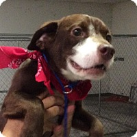 Adopt A Pet :: Bruiser (has been adopted) - Albany, NY