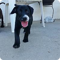Adopt A Pet :: Taylor - Weeki Wachee, FL