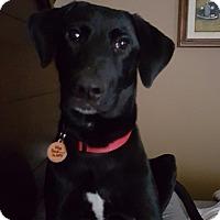 Adopt A Pet :: Dixon - Austin, TX