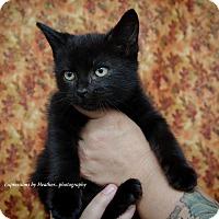 Adopt A Pet :: Jameson - Marlton, NJ