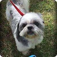 Adopt A Pet :: BACI - Phoenix, AZ