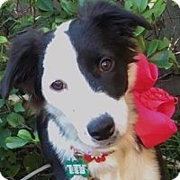 Adopt A Pet :: Baby - Dallas, TX