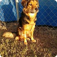 Adopt A Pet :: River - Manhasset, NY