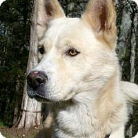 Adopt A Pet :: Mush - Canterbury, CT