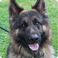 Adopt A Pet :: BRAVO - Red Bluff, CA
