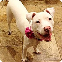 Adopt A Pet :: Dutchess - Reisterstown, MD