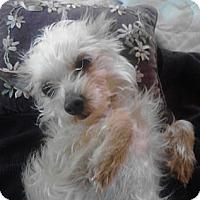 Adopt A Pet :: Pelusa - Houston, TX