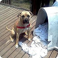 Adopt A Pet :: Zach - Blanchard, OK