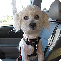 Adopt A Pet :: Fiona - Culver City, CA