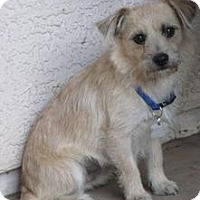 Adopt A Pet :: Molassas - Phoenix, AZ