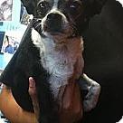 Adopt A Pet :: Eugene