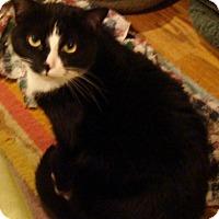 Adopt A Pet :: BoBo - Muncie, IN