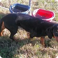 Adopt A Pet :: Maggie - Waller, TX
