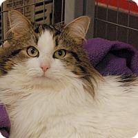 Adopt A Pet :: Decker - Winchendon, MA