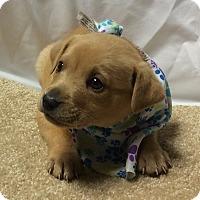 Adopt A Pet :: Sander - Buffalo, NY