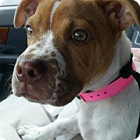 Adopt A Pet :: Lady - Las Vegas, NV
