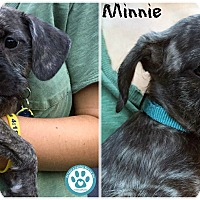 Adopt A Pet :: Minnie - Kimberton, PA