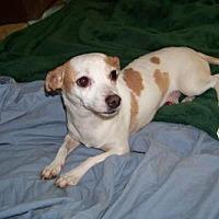 Adopt A Pet :: Longfellow - Glendale, AZ