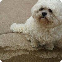 Adopt A Pet :: December - Inver Grove, MN