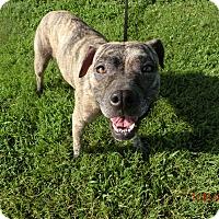 Adopt A Pet :: Isabella - MC KENZIE, TN
