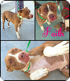 Pit Bull Terrier Mix Dog for adoption in California City, California - Faith