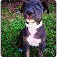 Adopt A Pet :: Sparkle - Jasper, IN
