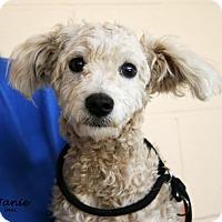 Adopt A Pet :: Janie - Santa Maria, CA