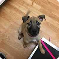 Adopt A Pet :: LEIGHLA - Fort Collins, CO