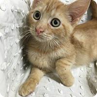 Adopt A Pet :: Ivan - Paducah, KY