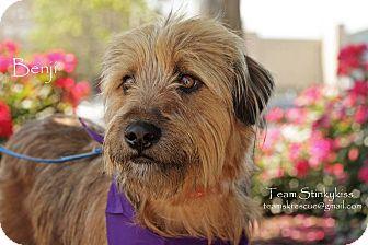 Terrier (Unknown Type, Medium) Mix Dog for adoption in Aiken, South Carolina - Benji