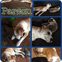 Adopt A Pet :: Parson - Ravenna, TX