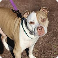 Adopt A Pet :: Red - Mount Laurel, NJ