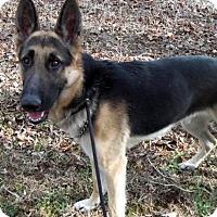 Adopt A Pet :: Gunner - New Ringgold, PA