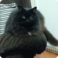 Adopt A Pet :: Allie Kat - New Martinsville, WV
