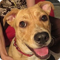 Adopt A Pet :: Smiling Annie ~ Family Dog! - St Petersburg, FL