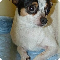 Adopt A Pet :: 49203 Ninja - Zanesville, OH
