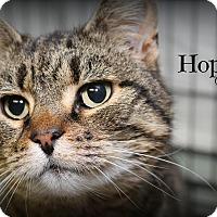 Adopt A Pet :: Hope - Glen Mills, PA