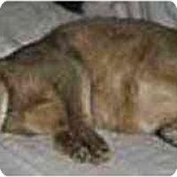 Adopt A Pet :: Ryder - Davis, CA