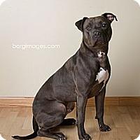 Adopt A Pet :: TREVOR - Minnetonka, MN