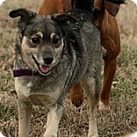 Adopt A Pet :: Babe - Maysel, WV