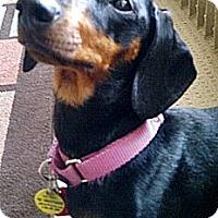 Adopt A Pet :: Ziva - Toronto, ON