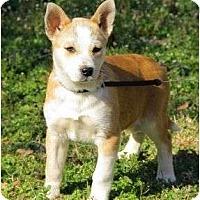Adopt A Pet :: Ashton - Staunton, VA