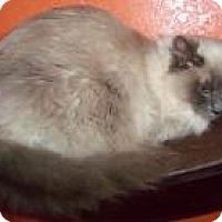 Adopt A Pet :: Sage - Ennis, TX