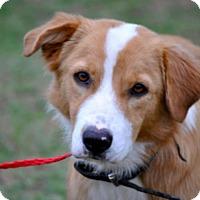 Adopt A Pet :: Bradshaw - Austin, TX